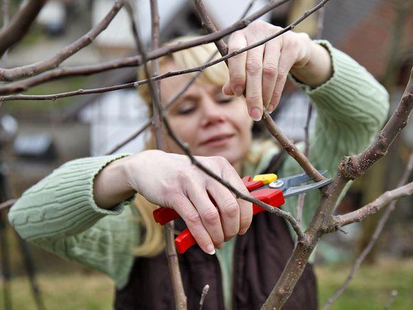 die besten 25 apfelbaum ideen auf pinterest kirschbaum pflanzen wie man einen gem segarten. Black Bedroom Furniture Sets. Home Design Ideas