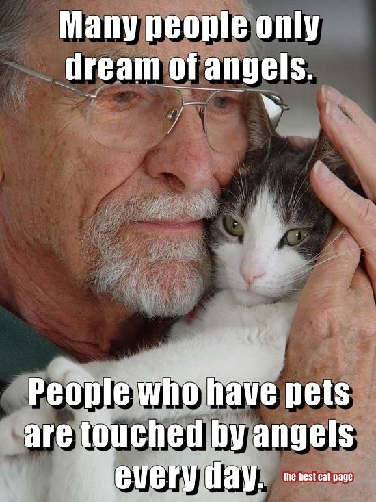 I don't believe in angels, but pets certainly touch our hearts and lives like nothing else can.