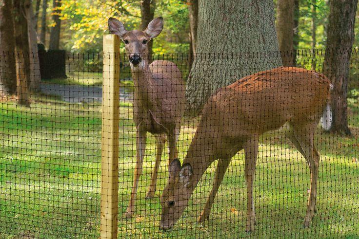 deer netting