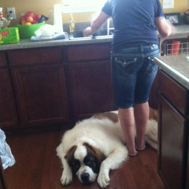 Dog Ate Some Rug: 216 Best Images About St. Bernard Pictures On Pinterest