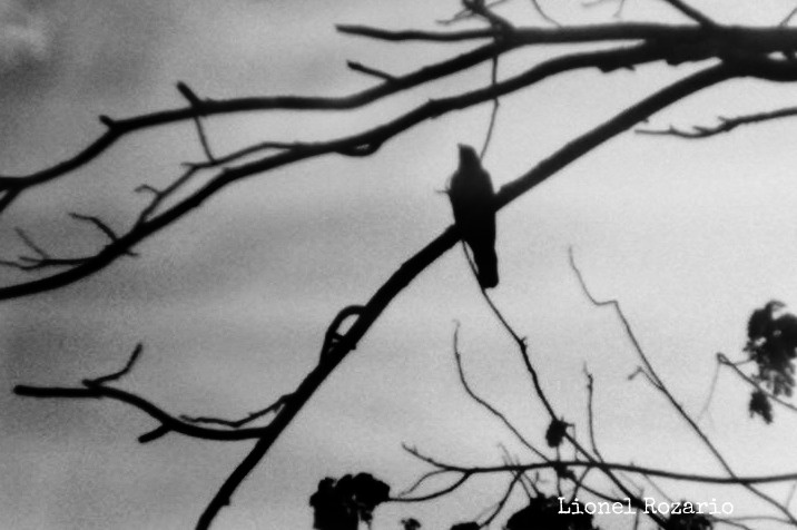 The Crow, the Night.