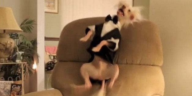 These Dogs Dancing To Coldplay's New Song Will Make Your Day Exponentially Better