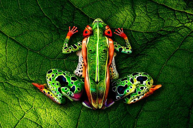What first appears like a photograph of a chameleon grappling onto a small branch is actually something far more incredible. The chameleon is actually two painted women posing in a position that makes them take the form of a chameleon, painted by body paint artistJohannes Stötter.This piece tookStötter 4 hours to design and 6 hours on top of that to actually paint. The end result is incredible. Check out the video below which shows the final piece and how the women are positioned ...