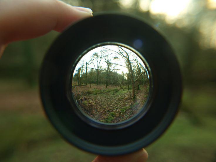 Macro / fisheye lens forest picture