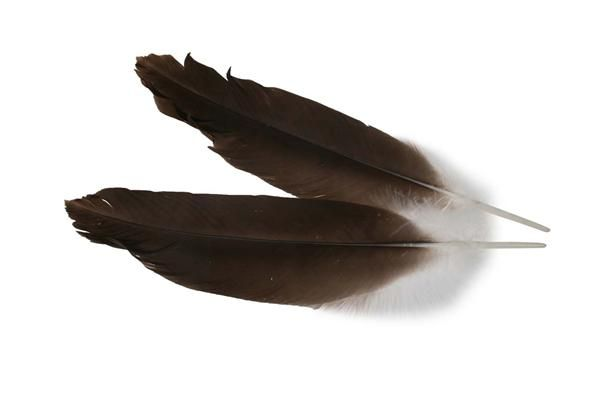 Feather www.houseofbk.com
