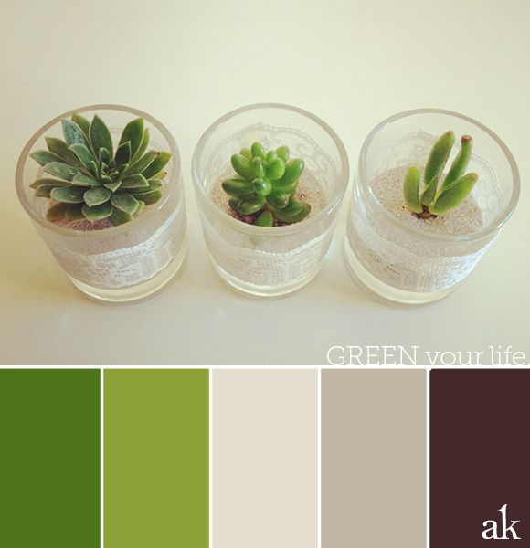 Best A Succulent Inspired Color Palette Green Ivory Sand 400 x 300