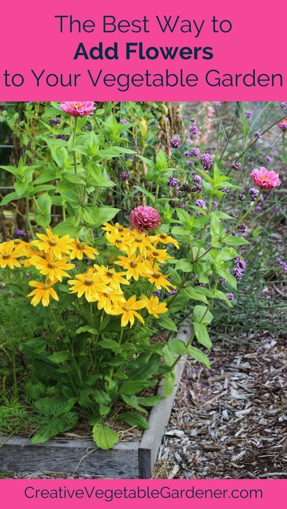 adding beauty to your garden with flowers