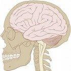 De hersenen hebben een grote behoefte aan zuurstof dat wordt aangevoerd door het bloed. Toch zijn het bloed en de hersenen van een mens gescheiden. In...