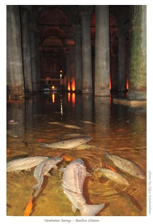Cistern Carp, Istanbul, Turkey - This was in the Basilica Cisterns