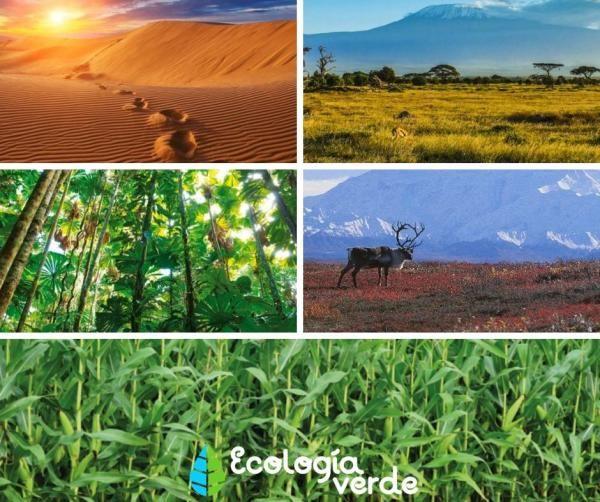 23 Tipos De Ecosistemas Clasificación Y Ejemplos Tipos De Ecosistemas Ecosistemas El Ecosistema Terrestre