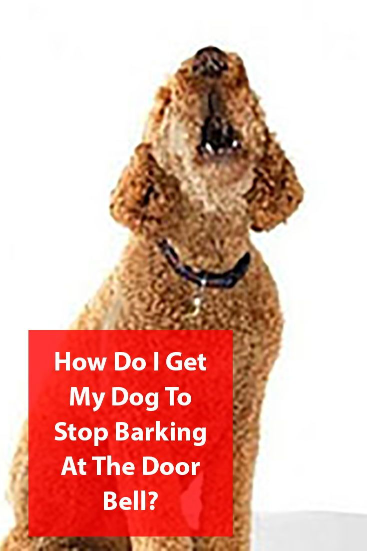 Stop Your Dog Barking At The Door Bell Dog Barking Dog Behavior