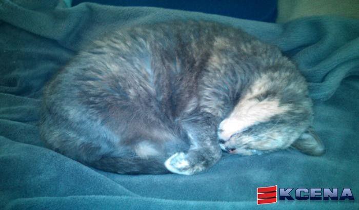 Nina uma gata que ressona forte e feio