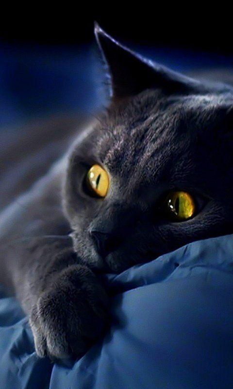 Chat Noir (Black Cat).
