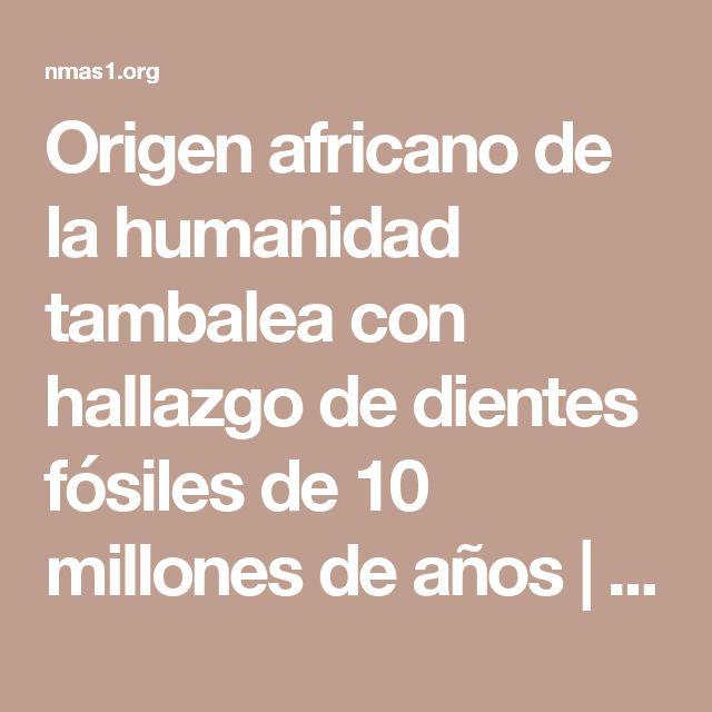 Origen africano de la humanidad tambalea con hallazgo de dientes fósiles de 10 millones de años | N+1: artículos científicos, noticias de ciencia, cosmos, gadgets, tecnología