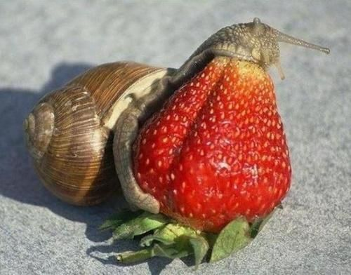 The snail and the strawberry :P