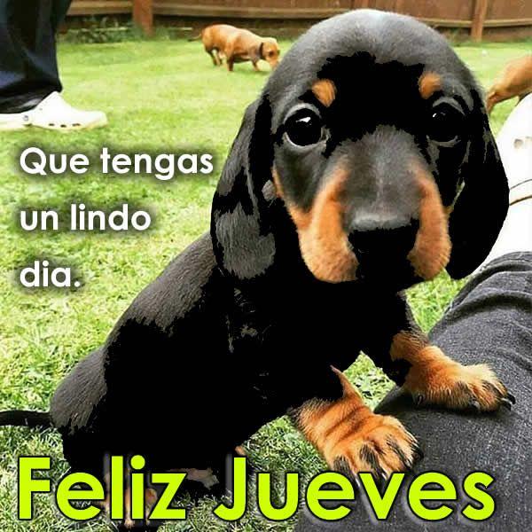 Letras con frases de buen dia jueves   Buenos dias jueves, Frases de buenos  días, Buenos dias perros