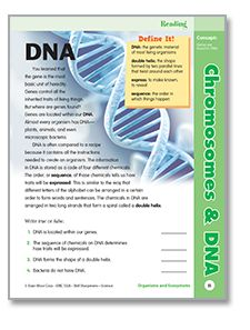 what is dna essay