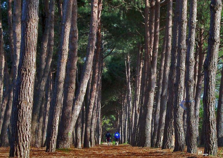 Pineto, deliziosa località balneare della costa teramana, è famosa anche per la sua bellissima pineta che si sviluppa per diversi chilometri a ridosso del mare. Tutto l'anno è un luogo piacevolissimo per lunghe passeggiate! Foto di Domenico Del Gallo