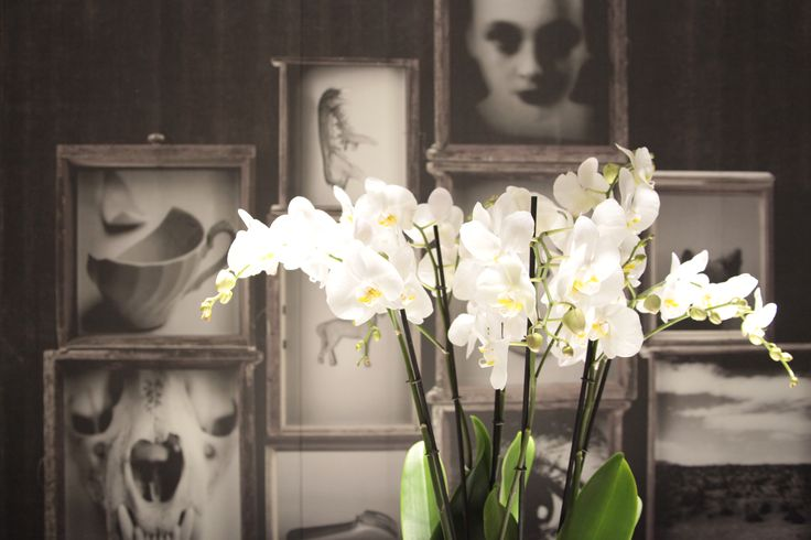 Discover the exclusive CasaMorandi showroom in via Sterlino 4, Bologna. Inside our wallpapers.