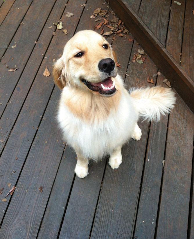 puppydog <3: Sweet Faces