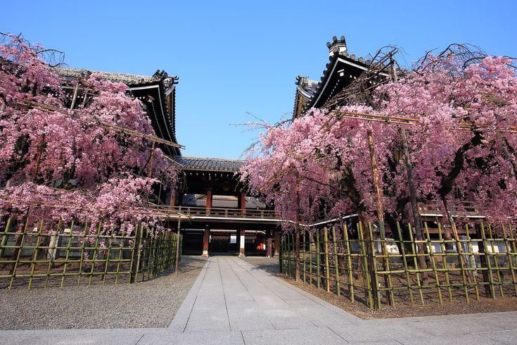 しだれ桜の隠れた名所の仏光寺
