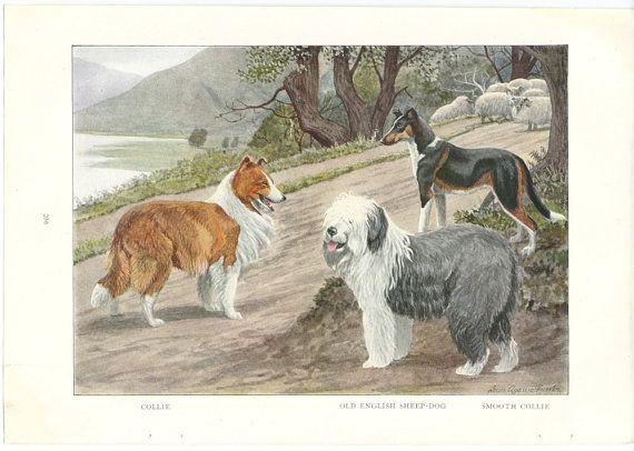 Ancien chien de berger anglais impression des années par RoxyRani