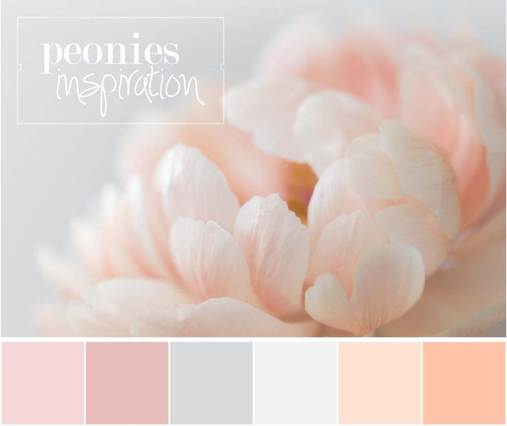 Colour Palette Inspired By Cream Peonies  | Sofia Damén | photo by www.dmkphotography.fi
