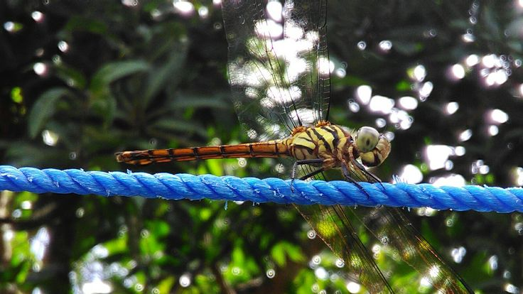 #dragonfly  #amateur #photography