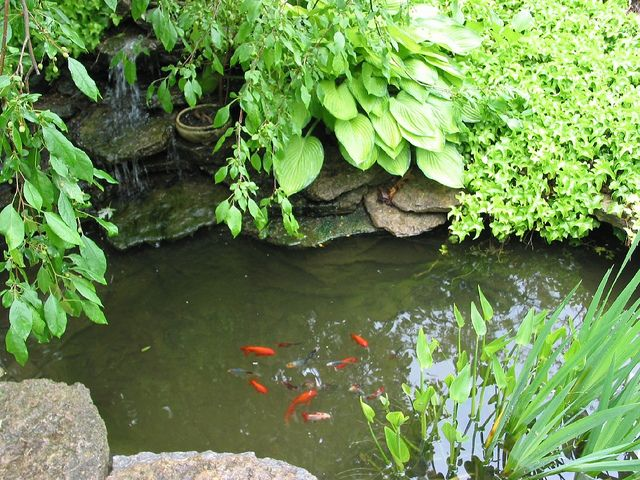 Best 25 patio pond ideas on pinterest backyard water for Small goldfish pond ideas