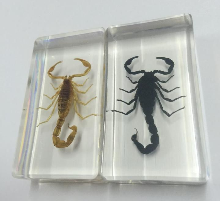 GRATIS VERZENDING 2 STKS Chinese Mode Real Gothic Scorpion in Clear Lucite Resin Paperweights Specimen Specimen