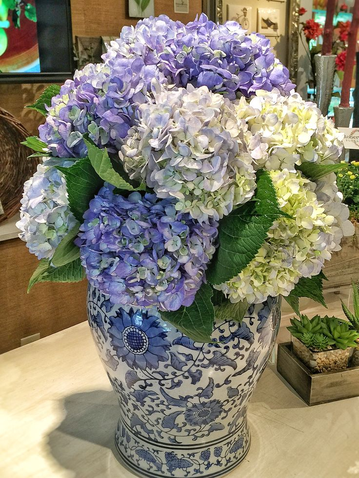 Ginger jar filled with stunning g hydrangea.
