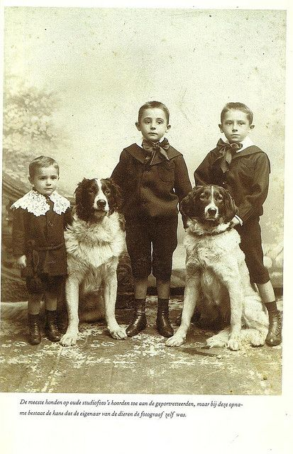 Vintage photo, three kids and two large dogs
