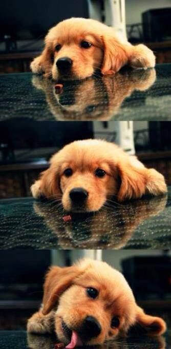 I just want to hug this doggie