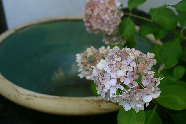 nonohana shinryo jo July 2008  by NanaAkua, via Flickr