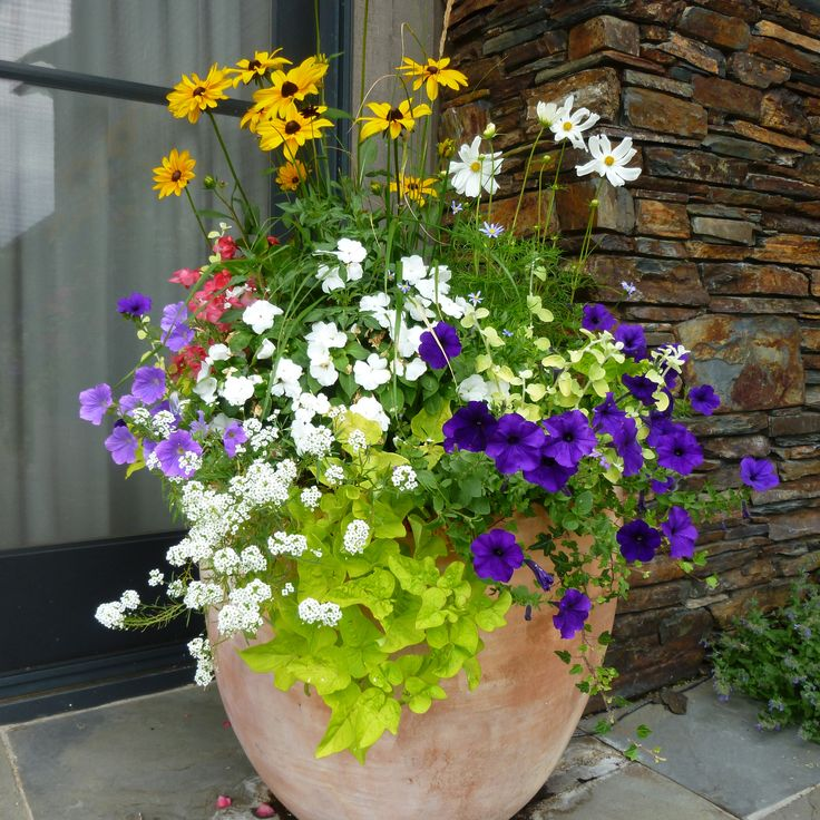 Potted flower arrangement ideas google search outside for Outside plants and shrubs