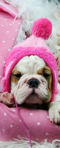 ❤ Prepared for winter --- should it come --- other wise --- JUST TOO CUTE ❤
