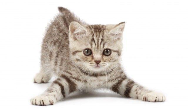 I disturbi del gatto; ne parla la nostra veterinaria dott. Frida Thèdi. alcuni preziosi consigli.