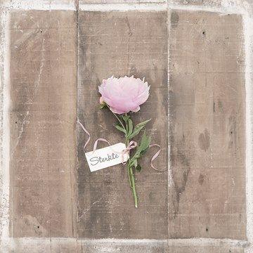 Een mooie kaart om iemand sterkte te wensen in een moeilijke tijd. #Hallmark #HallmarkNL #moeilijkemomenten #sterkte #roos