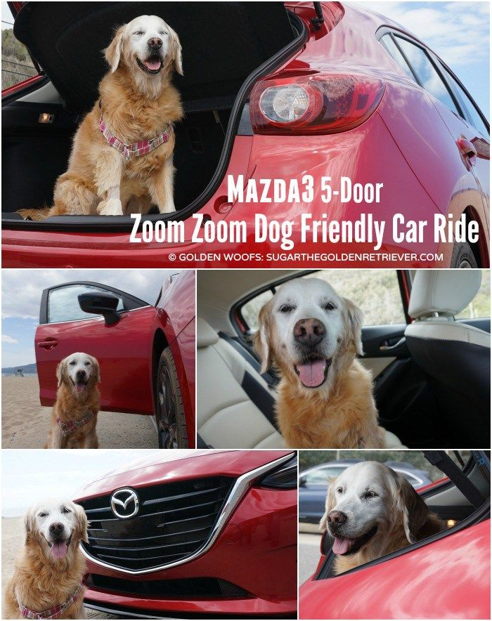 dog friendly car ride #Mazda3 5-door #DriveMazda