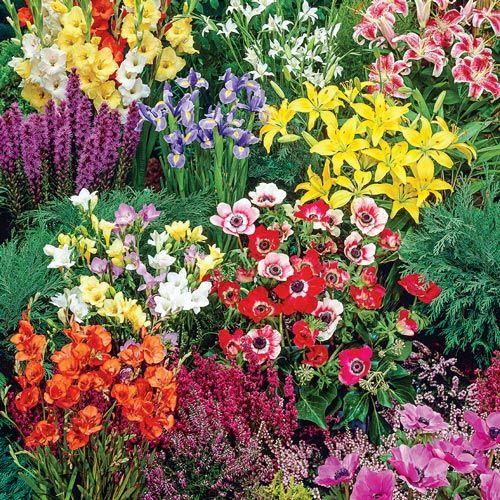 Flower Garden Ideas In Michigan 113 best ***summer garden images on pinterest | summer garden