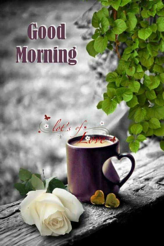 The 84 best Good Morning Wishes images on Pinterest Good morning