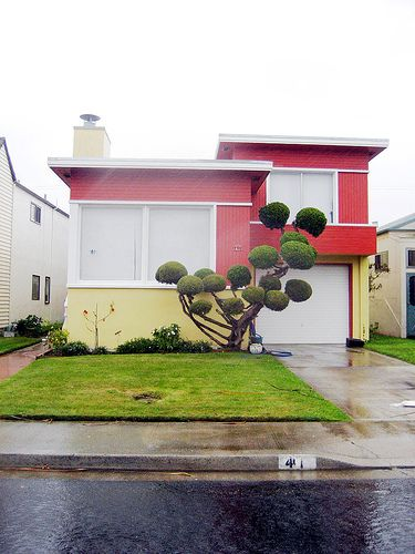 I wonder how much work it takes to keep this shrub looking fly.