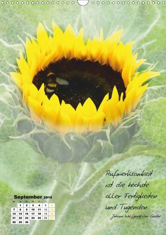 1000 bilder zu quotes zitate auf pinterest kreativ - Blumen zitate ...