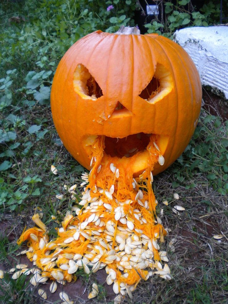 The 25 best pumpkin throwing up ideas on pinterest Pumpkin carving beer