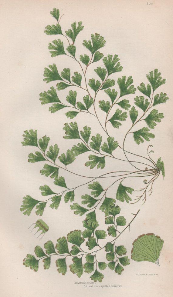 die besten 25 herbarium vorlage ideen auf pinterest. Black Bedroom Furniture Sets. Home Design Ideas