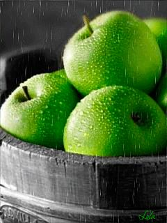Зеленые яблоки под дождем