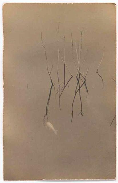 Masao Yamamoto // reminds me of my large format work