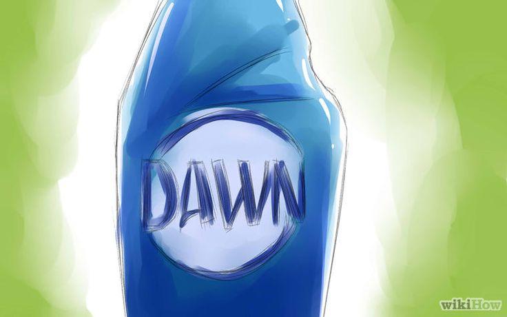 Kill Fleas With Dawn Dishsoap Step 1.jpg