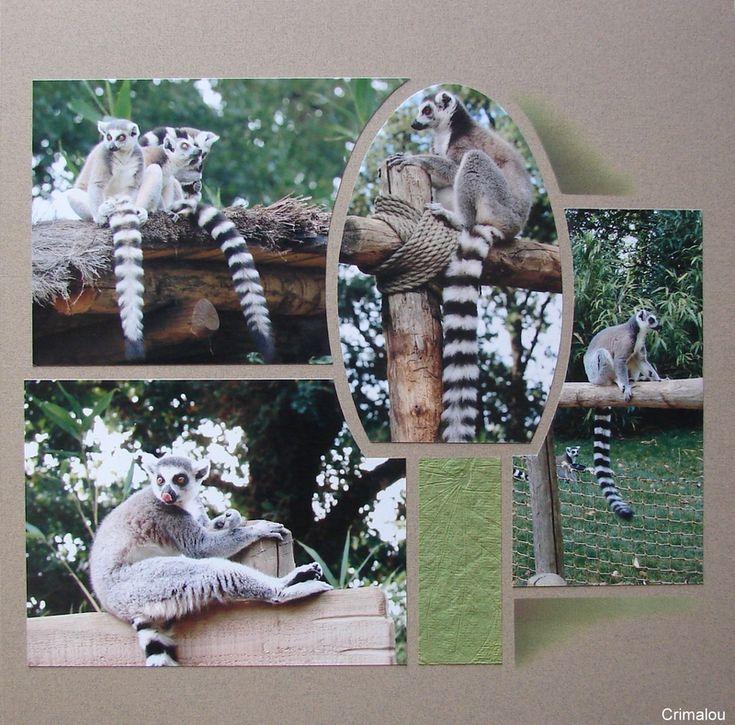 46 best images about zoo de la fleche on pinterest. Black Bedroom Furniture Sets. Home Design Ideas