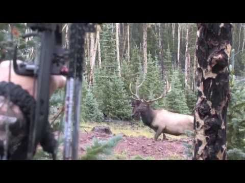Cam and Big Bulls in Colorado 2013 - YouTube